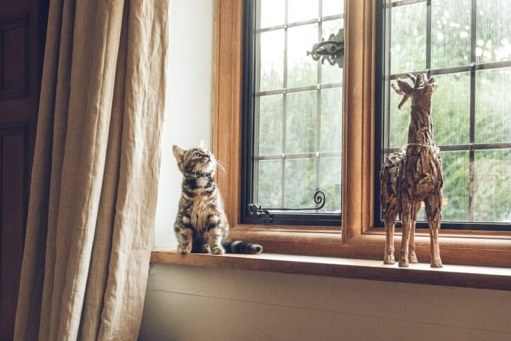 猫ちゃんのいる出窓の写真