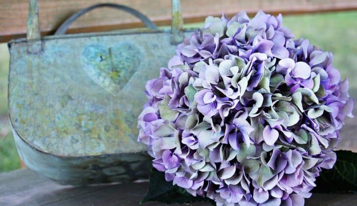 ブリキ缶と紫陽花の写真