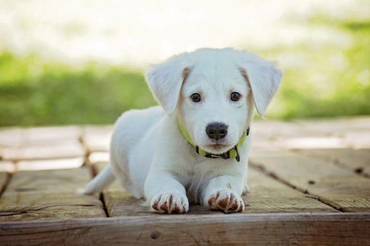 白い犬が座っている写真