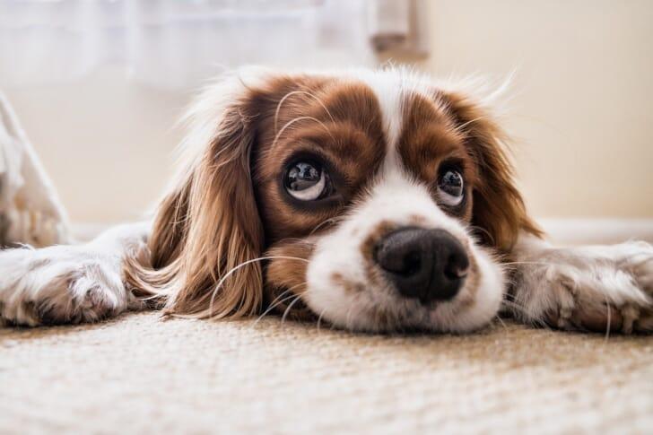 寝転ぶ犬の写真
