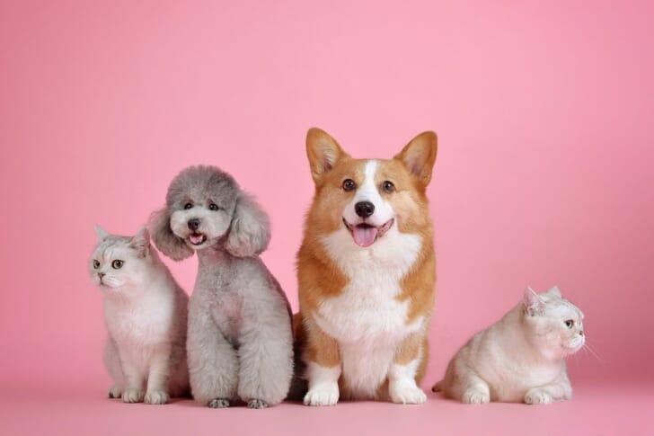 4匹の犬が座っている写真