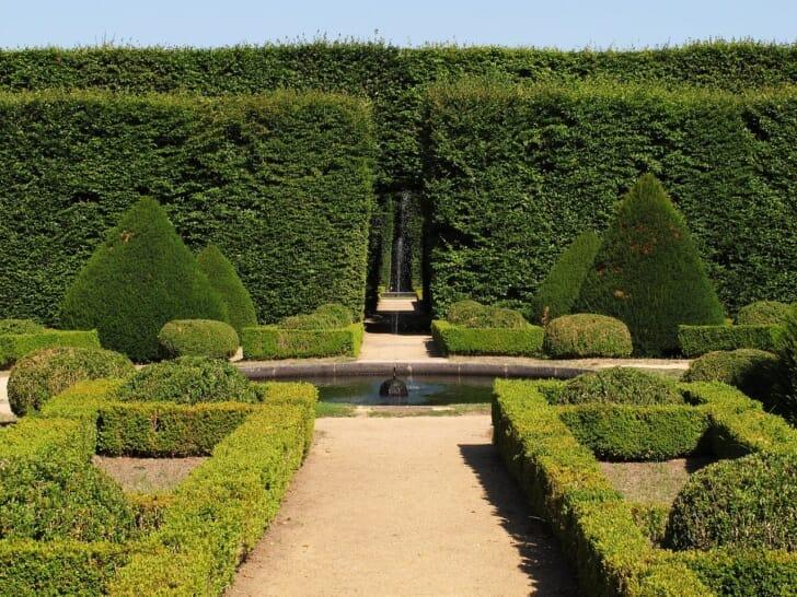 高い生垣のある庭の写真