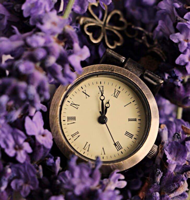 ラベンダーの中に懐中時計が埋まっている画像