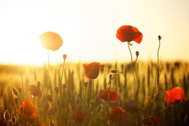 夕日と花の写真