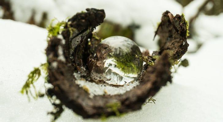 苔玉と水滴の写真