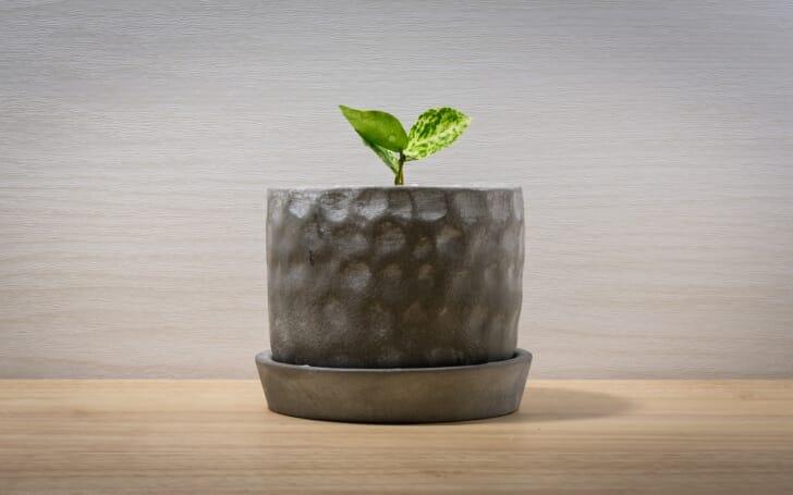 観葉植物と鉢の写真