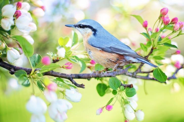 木の枝に鳥が止まっている画像
