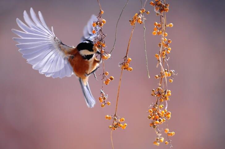 鳥が木の実をつつく写真