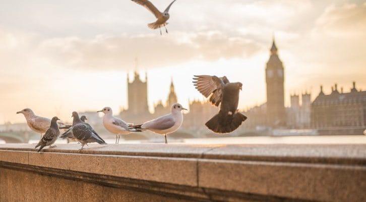 複数の鳩が止まったり飛ぼうとしたりしている写真