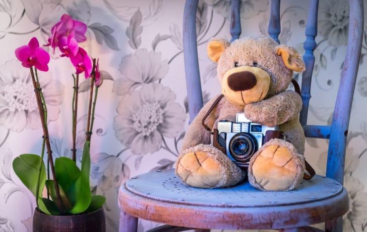カメラを持った熊の写真