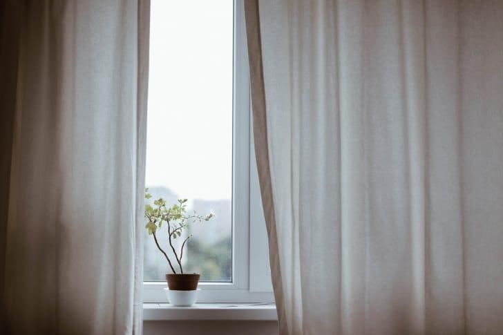 窓際のカーテンのと花の鉢の写真