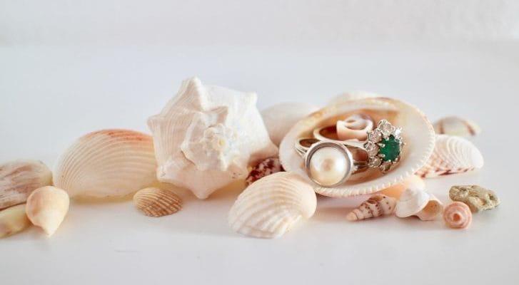 貝や真珠の写真