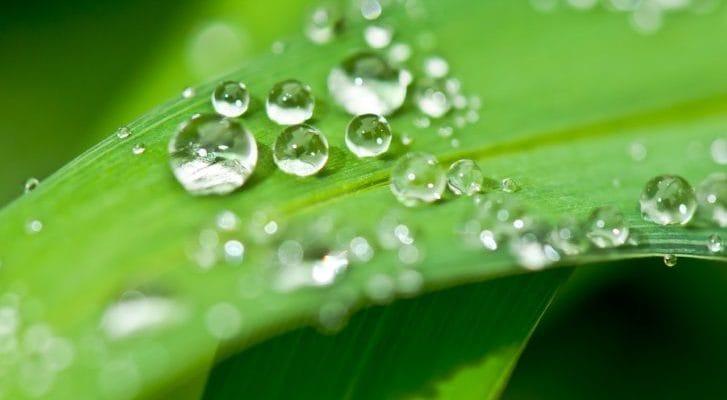 葉っぱに水滴が載っている写真
